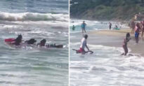 Video Shows K9 Lifeguards Rescuing Teenage Girl Swept Out to Sea by Ocean Current