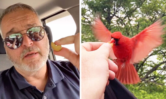 Man Forms Amazing Friendship With Red Cardinal, Shares Lunch With Him Every Day for 20 Months