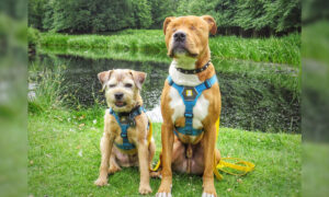 Born Blind, Adventurous Dog Hikes Mountains With Help from 'Tiny Bodyguard' Dog Sibling
