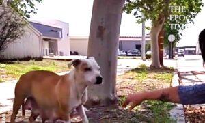 Family Dog Got Saved