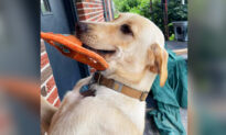 Adorable Rescue Dog Welcomes Owner Home Every Day by Bringing Her Different Gifts