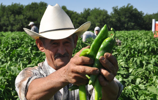 The harvest begins most years in late July and extends into October. (Joseph Sorrentino/Shutterstock)