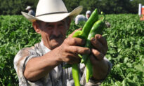 Hatch Chile Fever