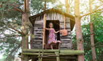 Will Building a Treehouse Harm the Tree?