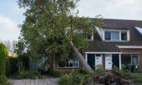 My Neighbor's Tree Fell on My Property
