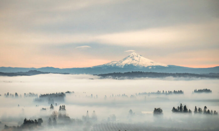 The Willamette Valley is the heart of Oregon wine country. (Leslie Brienza/Shutterstock)