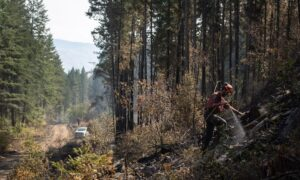Two Major Wildfires in B.C.'s Southern Interior Now Classified as 'Being Held'