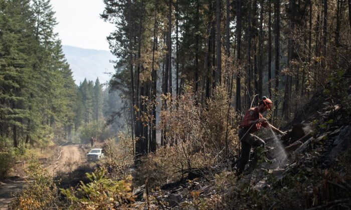 Wildland firefighter Ty Feldinger works on steep terrain to put out hot spots remaining from a controlled burn the BC Wildfire Service conducted to help contain the White Rock Lake wildfire on Okanagan Indian Band land, northwest of Vernon, B.C., on Aug. 25, 2021. (The Canadian Press/Darryl Dyck)
