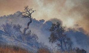 County Supervisors Blame Bad Policies—Not Climate Change—for California Wildfires