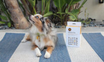 Get Detailed Information About Your Dog With This Simple DNA Test That's Over 35% Off