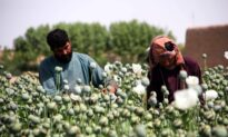Taliban Likely to Continue Afghanistan's Lucrative Drug Trade: Experts
