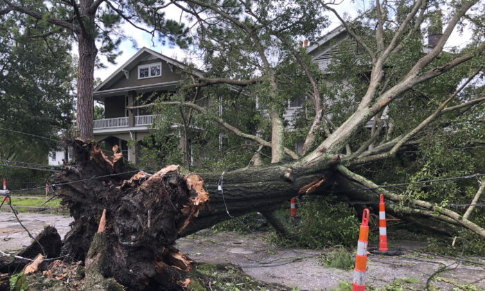 A massive oak, toppled by Hurricane Ida, stretches across a New Orleans street, stretching utility lines and resting against the fronts of two houses on Aug. 30, 2021. (Kevin McGill/AP Photo)