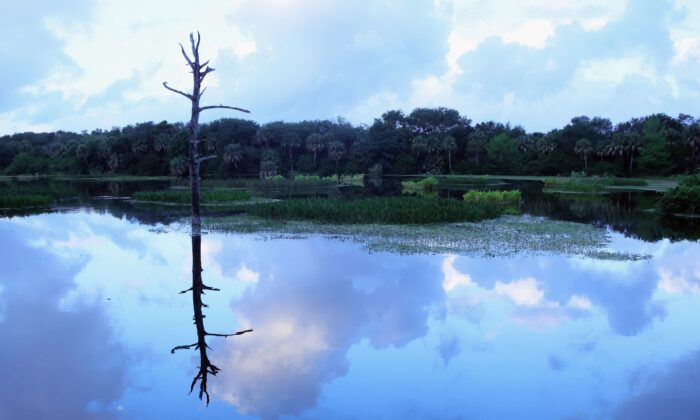 A wetland is seen in Florida in a file photograph. (Bruce Bennett/Getty Images)