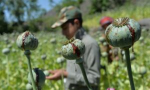 Amid Sanctions, Taliban Expected to Double Down on Drug Trafficking