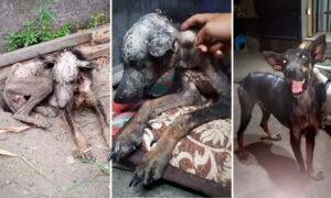 Photos Show Abused, Mangy, Malnourished Dog's Transformation After New Owner Adopts Him