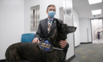 Miami Airport Rolls Out COVID-19 Detection Program That Uses Dogs