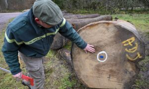 China's Massive Import of Timber Raises Alarm on Global Forest Industry