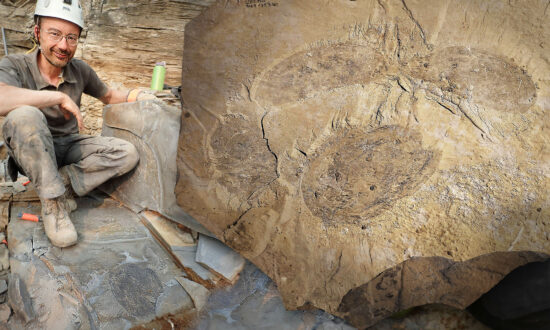 Scientists Unearth Huge Fossil of New Extinct Arthropod 500 Million Years Old in Rocky Mountains