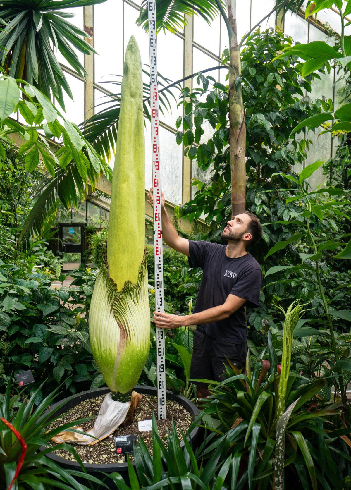 Kew Gardens - Guinness World Record