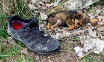 Man Finds Poor Abandoned Puppy Living in a Shoe, Feeds Her, Finds Her Perfect Forever Home
