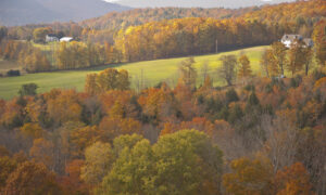 The Musical Leaves of Autumn: A Short Playlist
