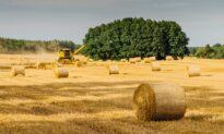 Price of Kansas Farmland up More Than 10 Percent