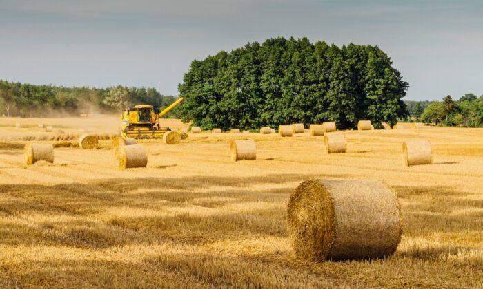 Kansas wheat harvest. (Pexels)