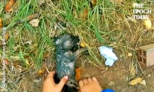 Kind Human Rescues Drowning Puppy