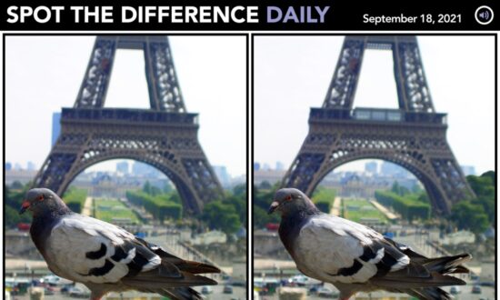 Spot the Difference Daily