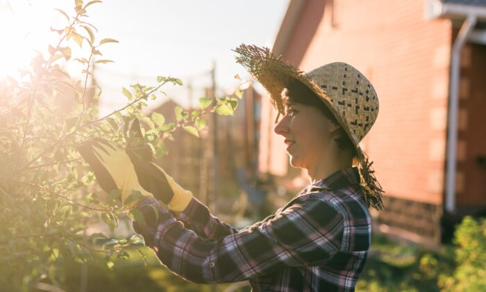 We can prune our lives much like we would prune a tree. This allows us to focus on what matters. (Tatiana Chekryzhova/Shutterstock)