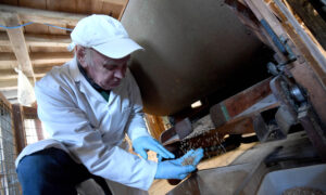UK to Add Folic Acid to Non-Wholemeal Wheat Flour