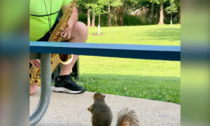 Video: Squirrel Enjoys Listening to a Professor of Music Practice His Saxophone at a Park