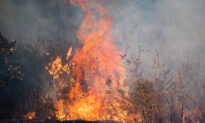 California Prevents Insurance Cancellations on Homes Near Forest Fires