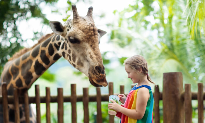Homeschool affords great flexibility to incorporate out-of-the-ordinary activities, such as field trips, on a regular basis. (Farm Veld/Shutterstock)