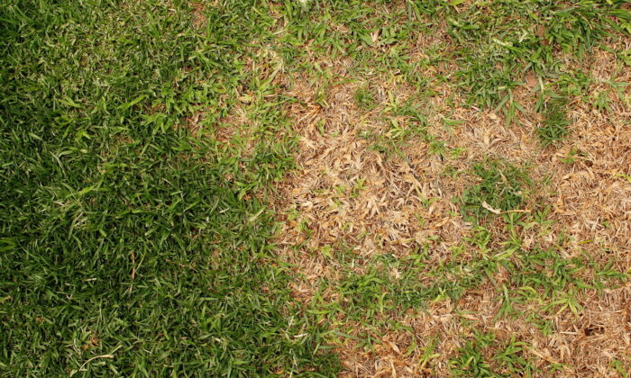 Before replanting a dead lawn, look at the area and decide if any changes need to be made to prevent future problems. (Henning van Wyk/Shutterstock)