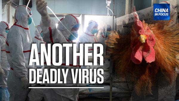 China Reports Human Case of Bird Flu