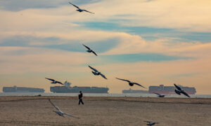 Los Angeles Cargo Ship Backlog Peaks, Supply Chain Issues to Last for Months