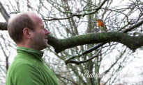 British Gardener Forms an Incredible and Unbreakable Bond With a Robin