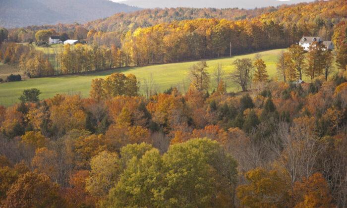 Enjoy music to match the autumn landscape. (Cat Rooney)