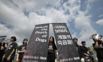 South Korean President Suggests Banning Dog Meat