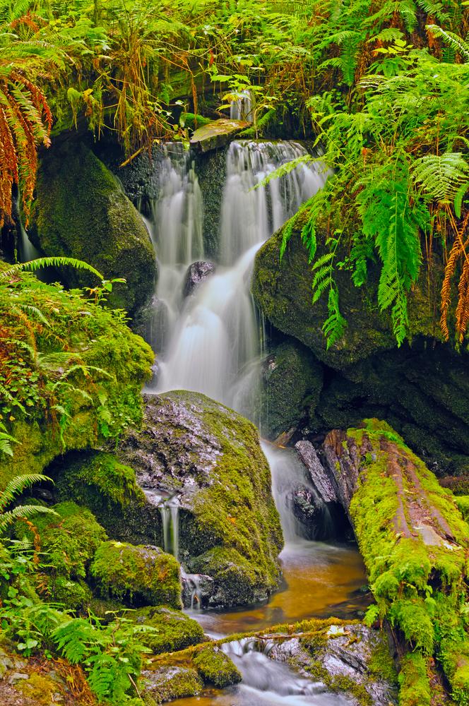 Trillium,Falls,In,Redwood,National,Park,In,California