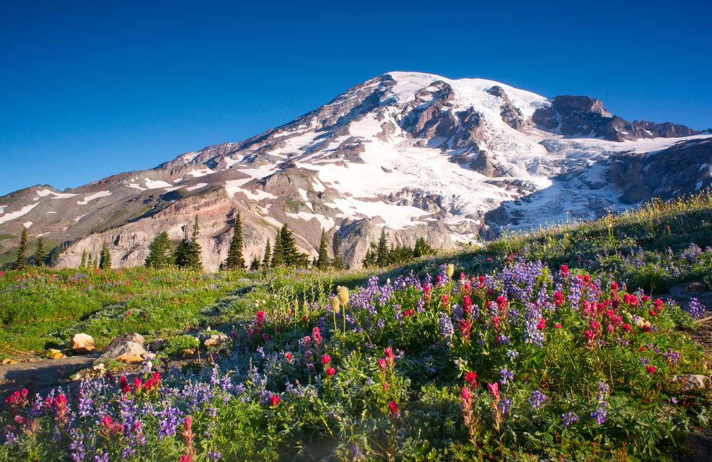 Mt,Rainier,National,Park,Wildflowers,Summer,Time,Cascade,Mountain,Wilderness
