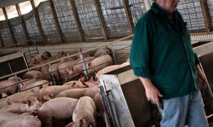 A farmer walks through a hog pen on his farm in Polo, Ill., on Jan. 25, 2020. (Brendan Smialowski/AFP via Getty Images)