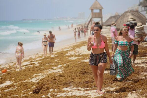 sand strewn with sargassum
