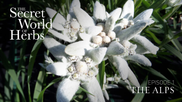 The Secret World of Herbs: In the Alps (Episode 1)