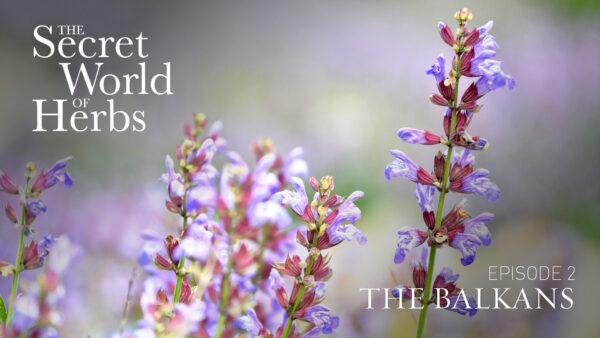 The Secret World of Herbs: In the Balkans (Episode 2)