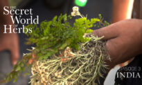 The Secret World of Herbs: In India (Episode 3)