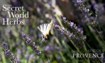 The Secret World of Herbs: In Provence (Episode 5)