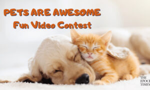 Pets Are Awesome: Fun Video Contest