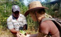 In Bolivia, Coca Farmers Find Exploitation Replaces Abuse